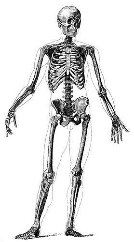 Anatomy for the artist jeno barcsay pdf free download